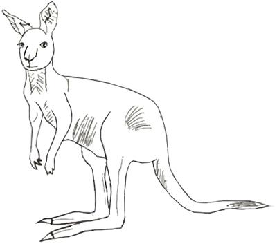 Drawn kangaroo Step a 5 step How