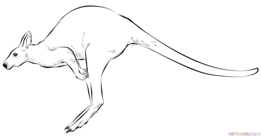 Drawn kangaroo Drawing Pencil Images Art Kangaroo