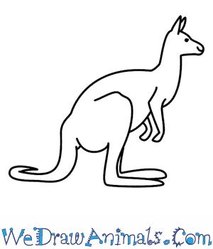 Drawn kangaroo Kangaroo A  To How