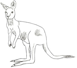 Drawn kangaroo Pencil Art Drawing Realistic Kangaroo