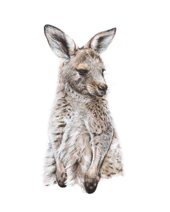 Drawn kangaroo joey kangaroo Acrylic drawing nature wildlife 5