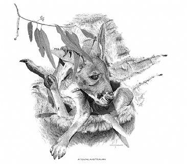 Drawn kangaroo joey kangaroo Pouch kangaroo pouch out mothers