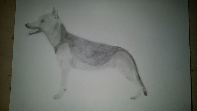 Drawn pug simple realism Draw Steps Realistic Pictures) ago