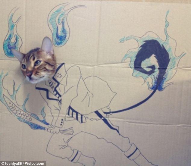 Drawn keyboard cat Guagua it's supernatural Cardboard a