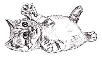 Drawn kitten Draw to Draw by 5