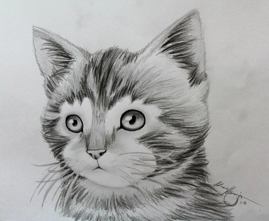 Drawn animal kitten #2