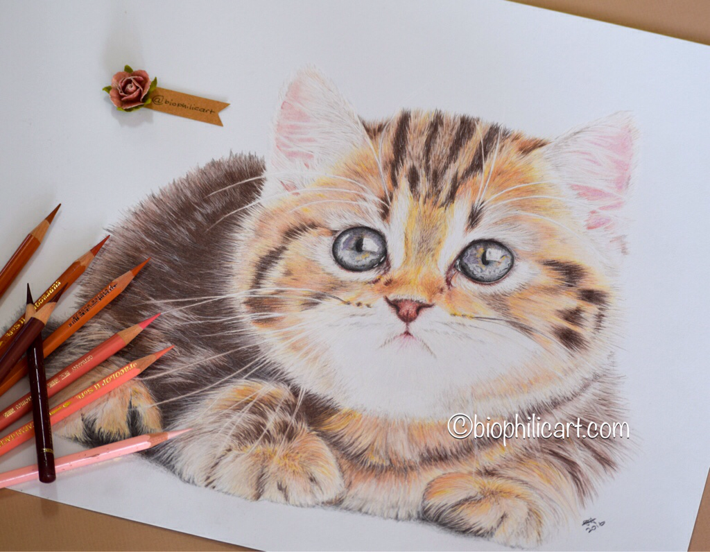Drawn kitten small Colored Original wildlife Cat a