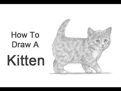 Drawn animal kitten #6