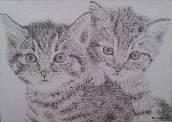 Drawn kittens Kitten megh95 by  by