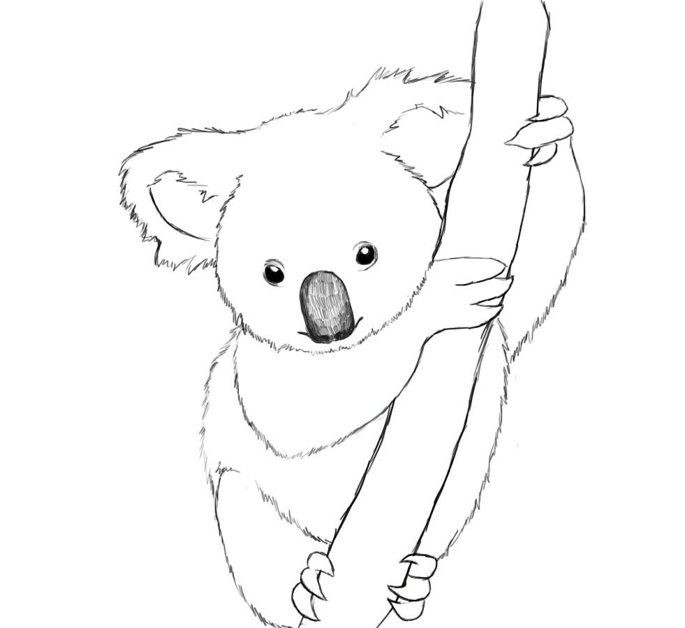 Drawn koala Koala Drawing To course How