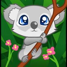 Drawn koala Draw a to koala How