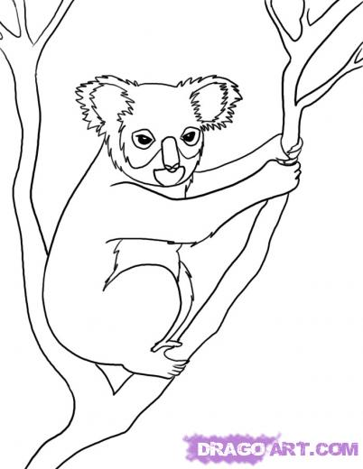 Drawn koala FREE Drawing How Lessons Learn