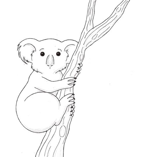 Drawn koala Bear Koala Bear photo#19 Drawing