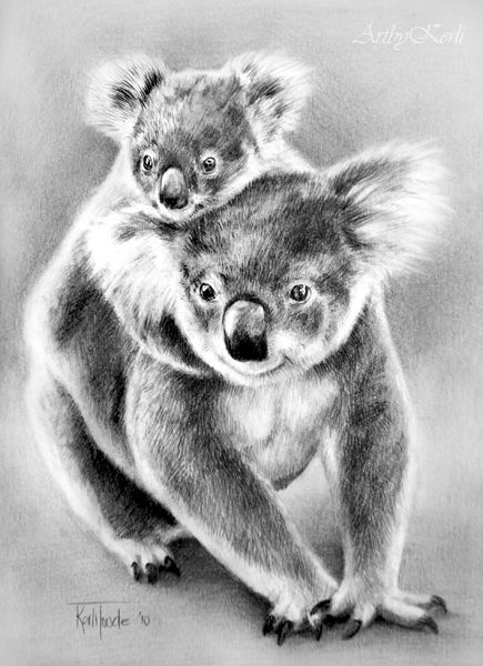 Drawn koala endangered animal #15