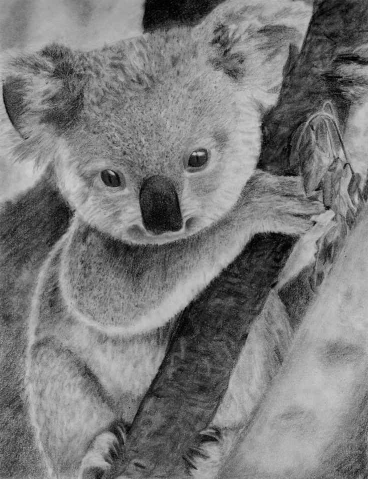 Drawn koala endangered animal #11