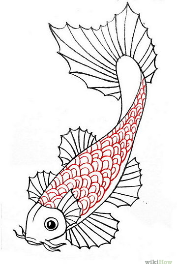 Drawn koi And Draw Draw Koi a