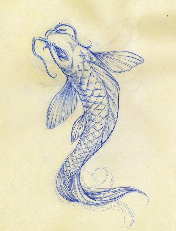 Drawn koi Art Koi fish animals 25+