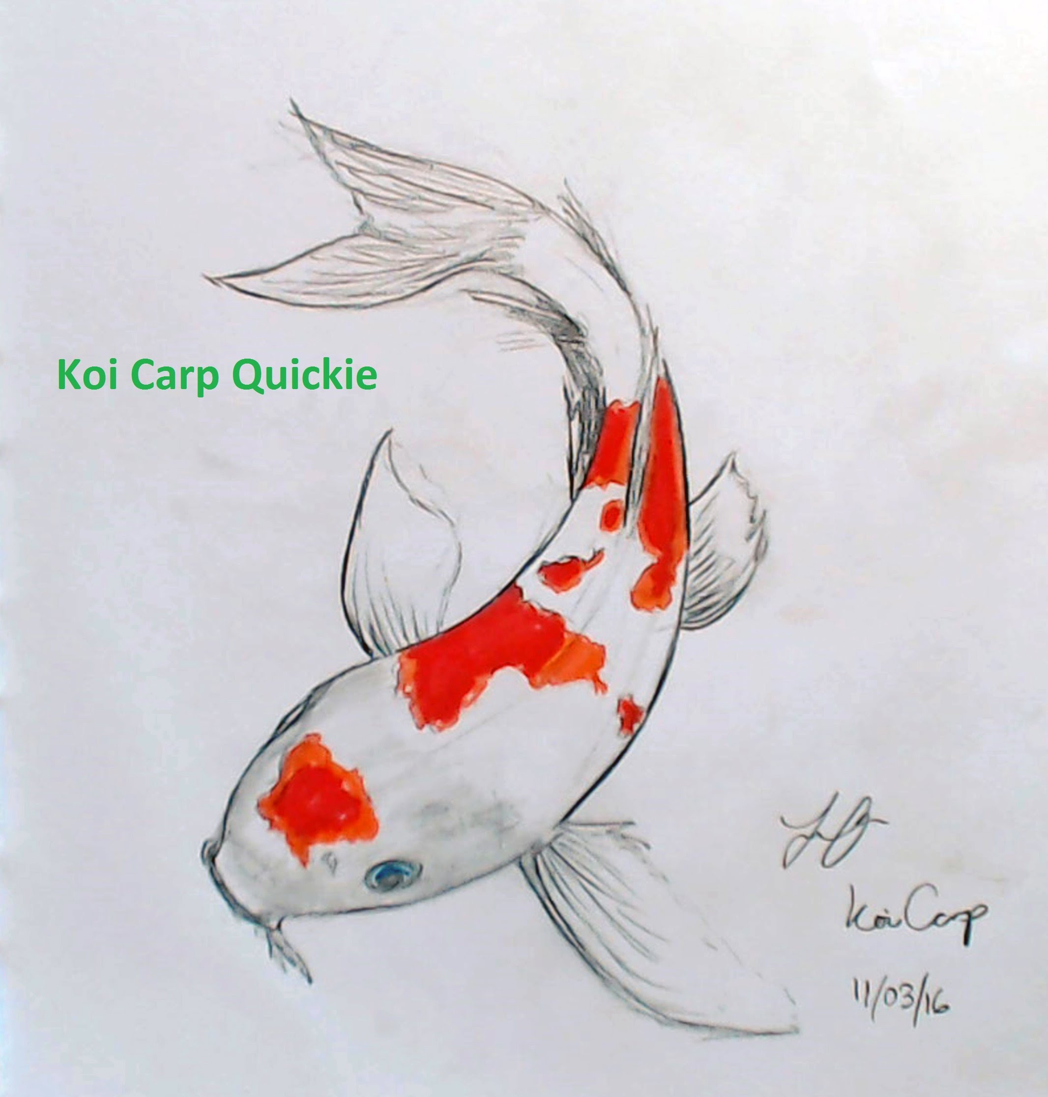 Drawn koi carp #10