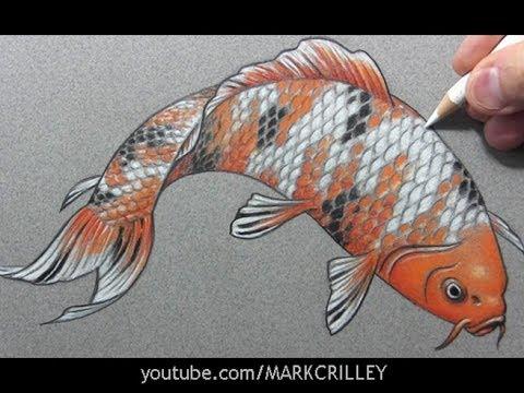 Drawn koi carp #12