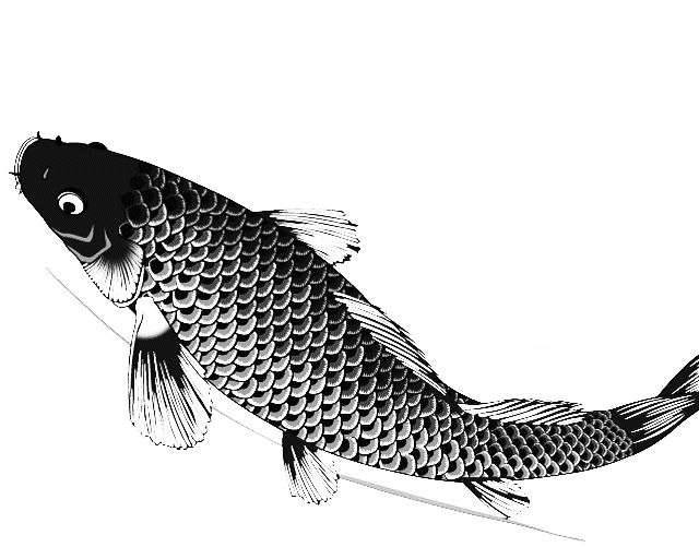 Drawn koi Many Koi single Helpful to