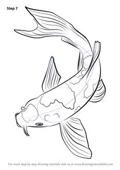 Drawn koi : Google to com drawing