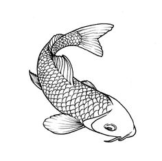 Drawn koi fish Koi fish drawing outline koi