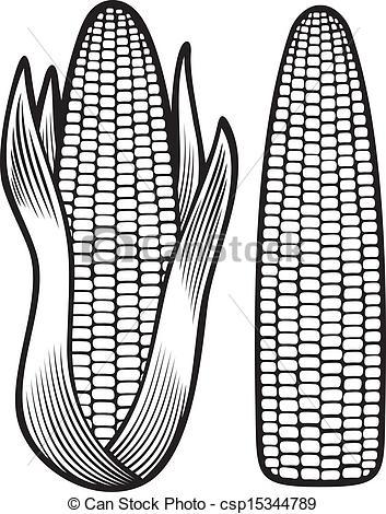Drawn korn cob clip art Corncob Vector  Vector corn