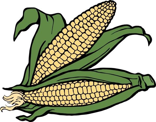 Drawn korn cob clip art  Free art drawing Corn