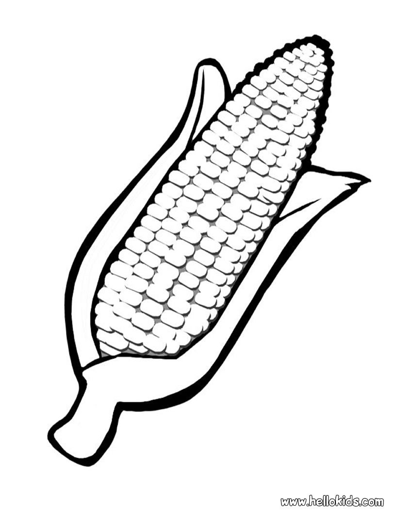 Drawn korn ear corn Preschool Family: page Michigan Lesson