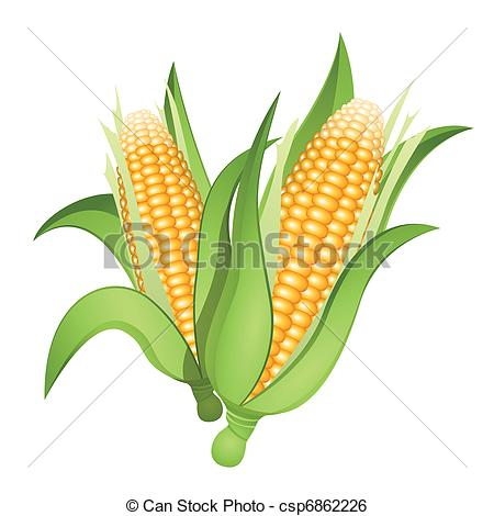 Drawn korn ear corn Two of Art isolated corn