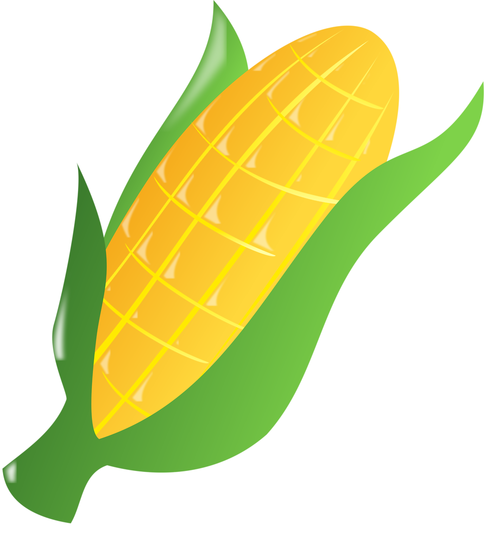 Drawn korn ear corn Free Free corn of an