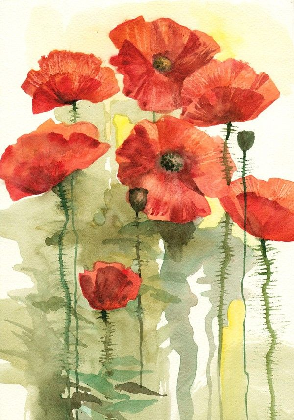 Drawn korn watercolor Watercolor 434 Poppies about Art