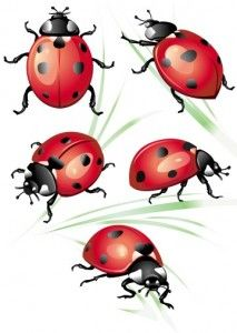 Drawn lady beetle Vintage Bug Pinterest Google http://stunningtattooreviews