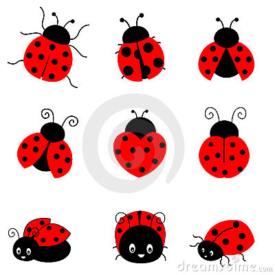 Drawn lady beetle White illustration on colorful on