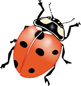Lady Beetle clipart Clipart Lady Flying Clipart Bug