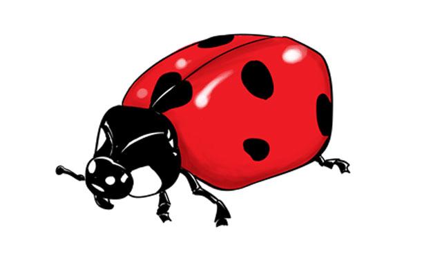 Drawn ladybug To Challenge Draw How –