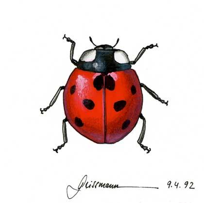 Drawn bug ladybug Lady photo#3 Bug drawing Lady