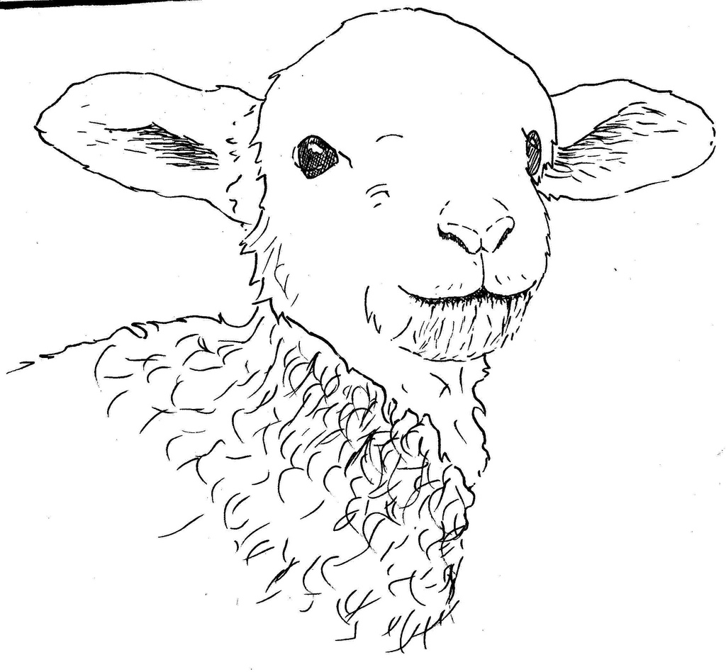 Drawn lamb #8