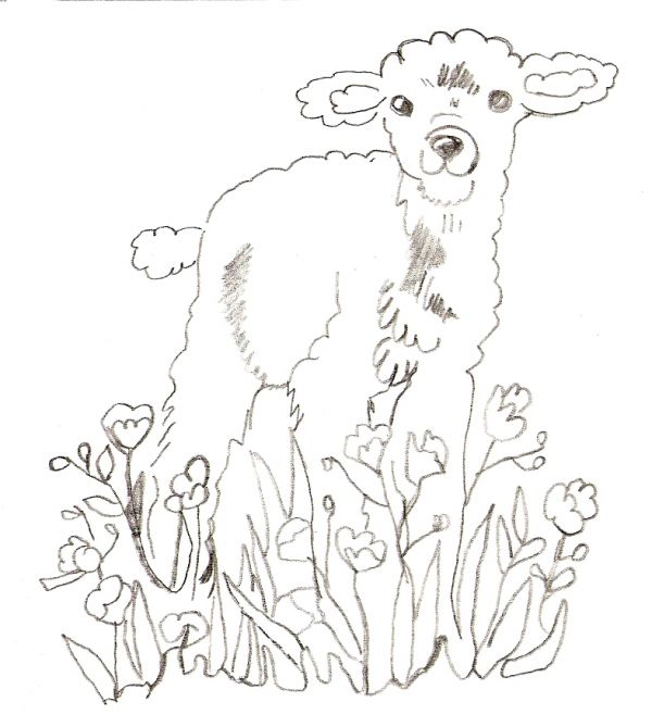 Drawn lamb #7
