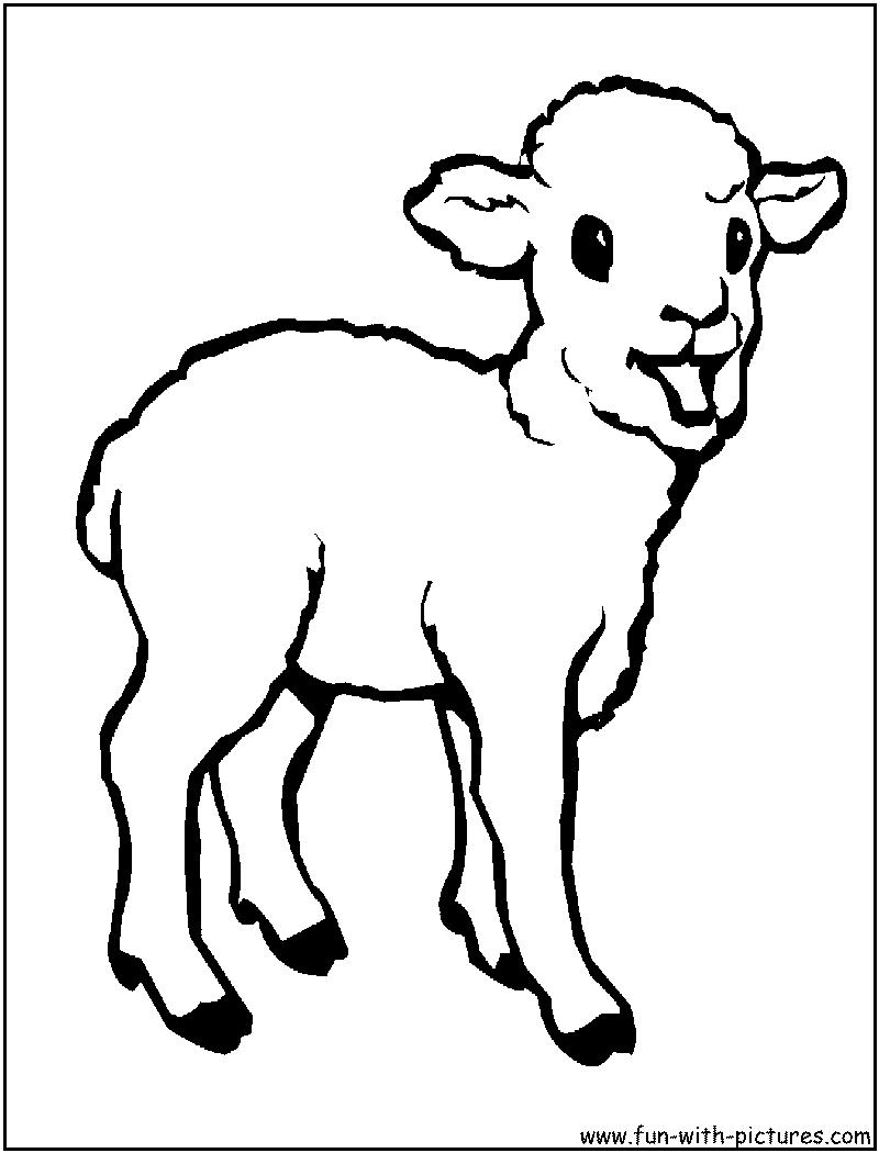 Baby Animal clipart baby lamb Sheep Baby photo#25 Baby sheep