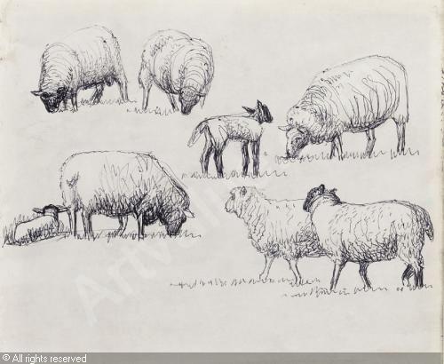 Drawn sheep pencil drawing Sheep more Pinterest 10+ ideas
