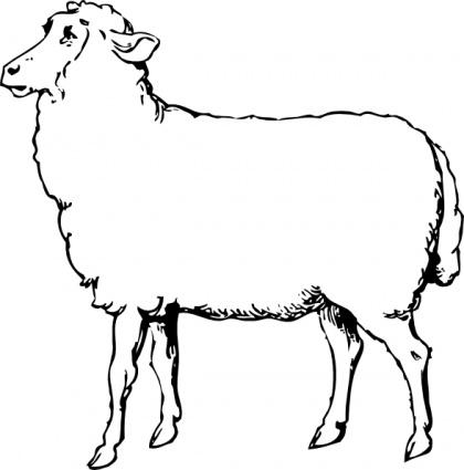 Mutton clipart Clothes black black food sheep