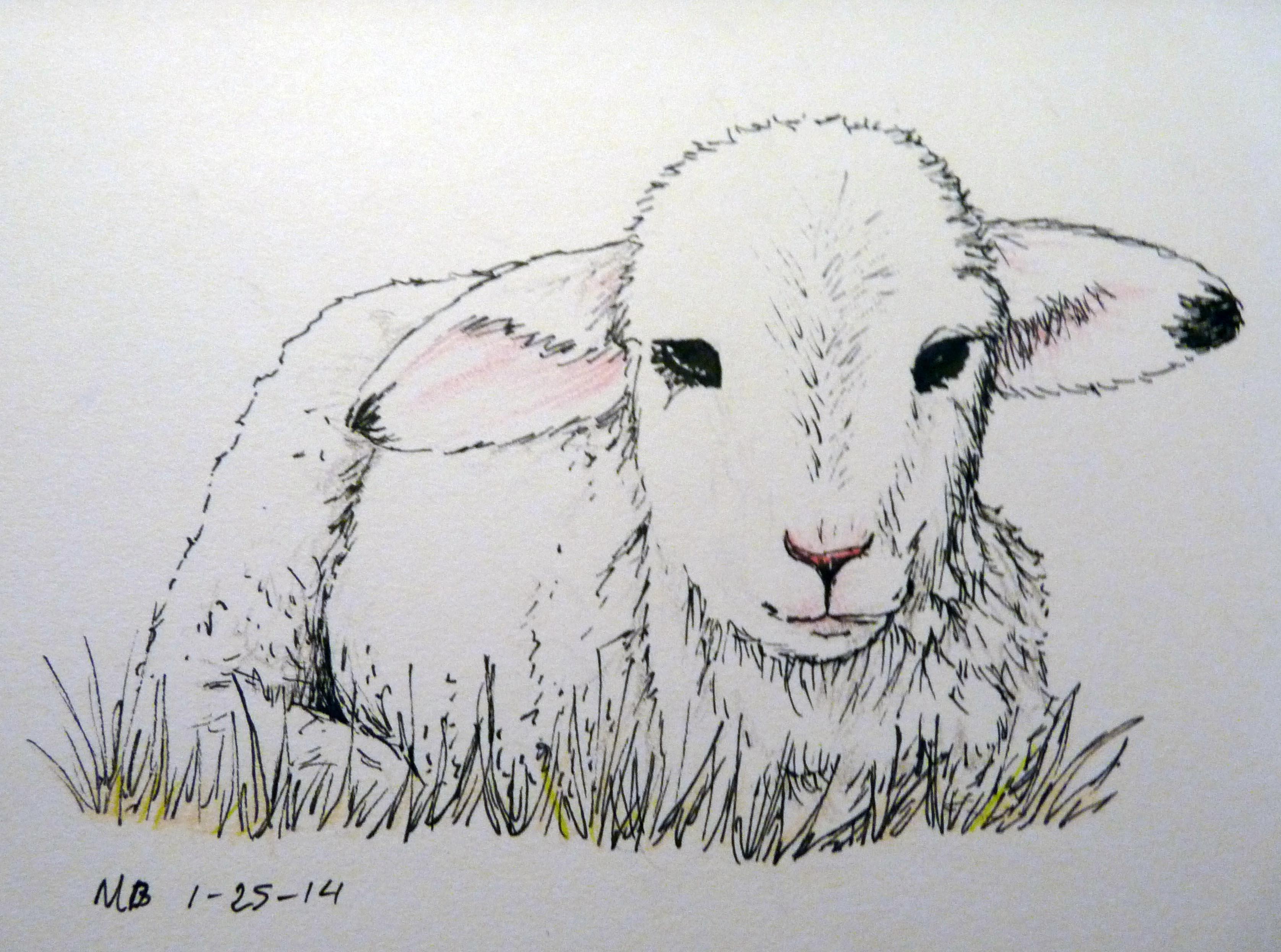 Drawn sheep pencil drawing  step Pin lambs Find
