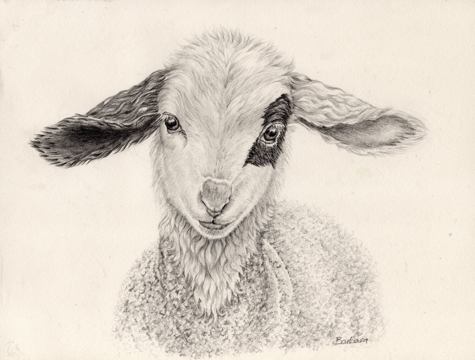 Drawn sheep pencil drawing Nature: in Sketching Easter