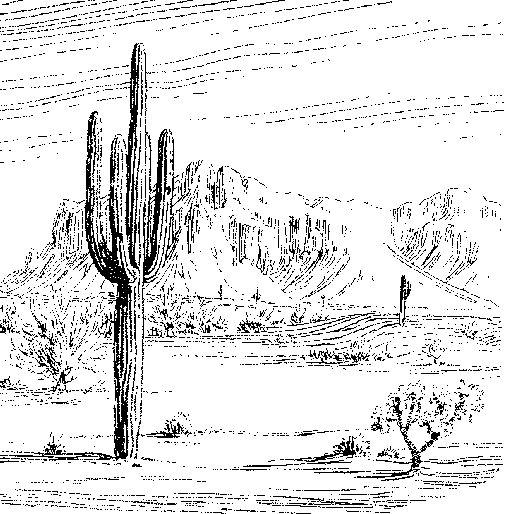 Drawn cactus desert landscape Of Desert on best Google