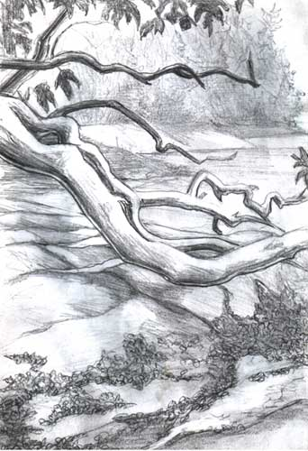 Drawn scenery beach Drawing tree landscape  with