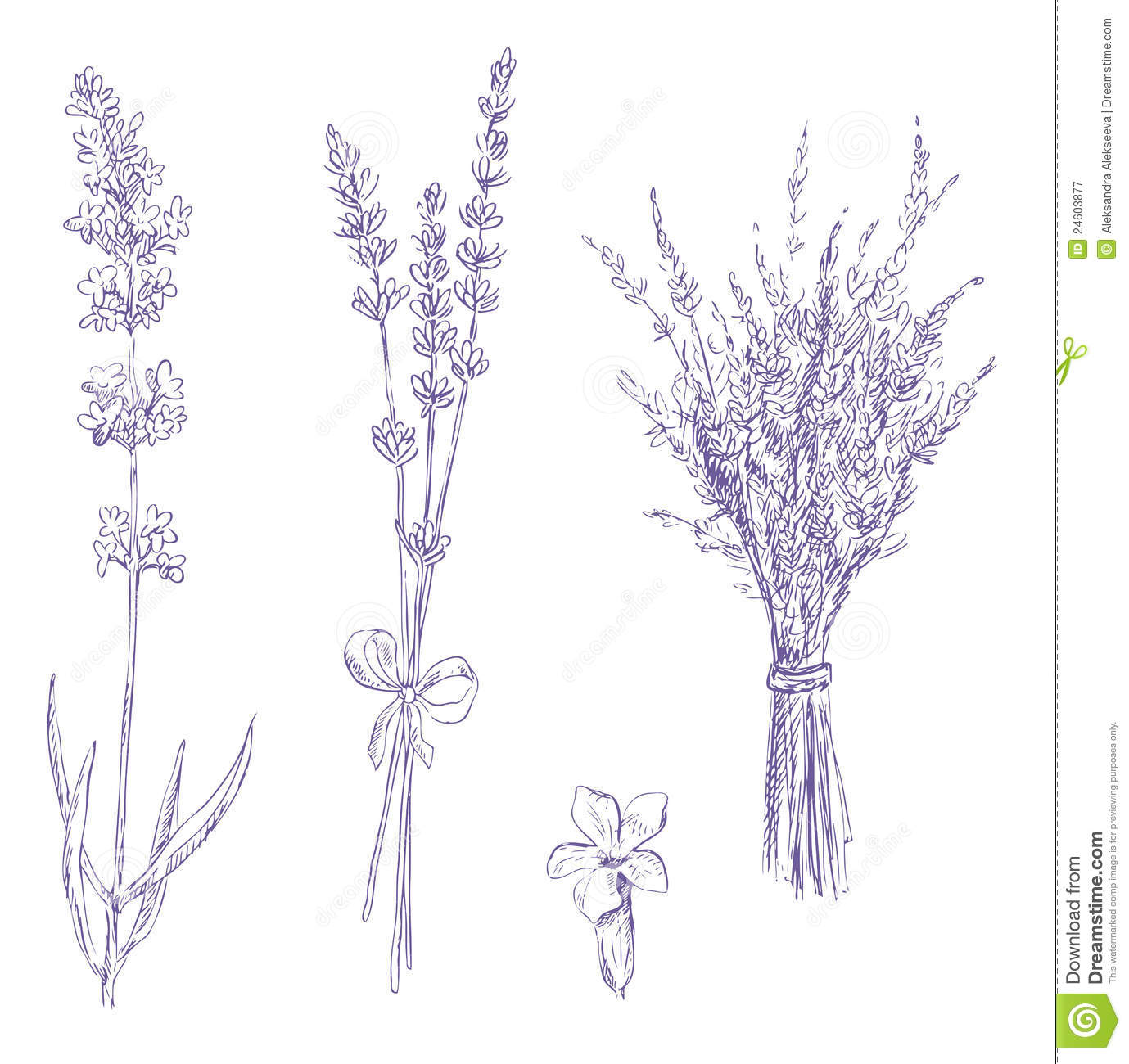 Drawn lavender #4