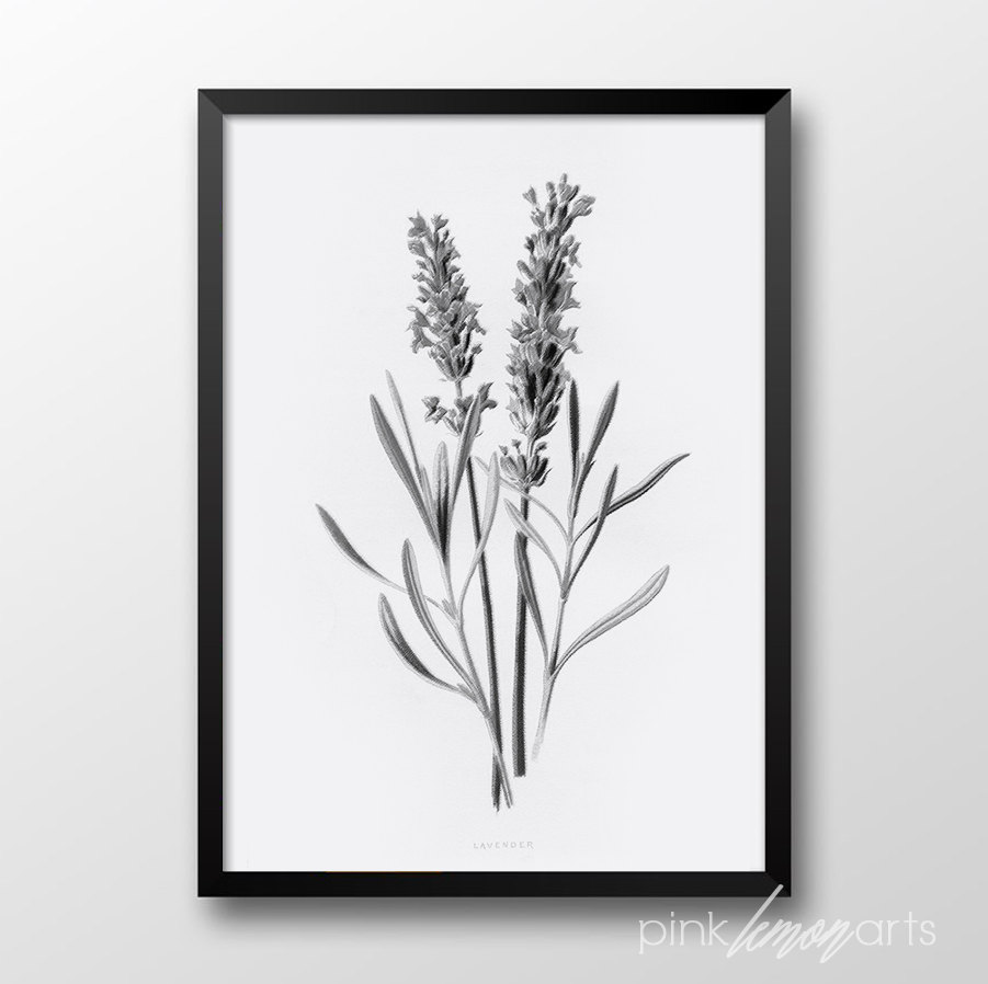 Drawn lavender black and white #8