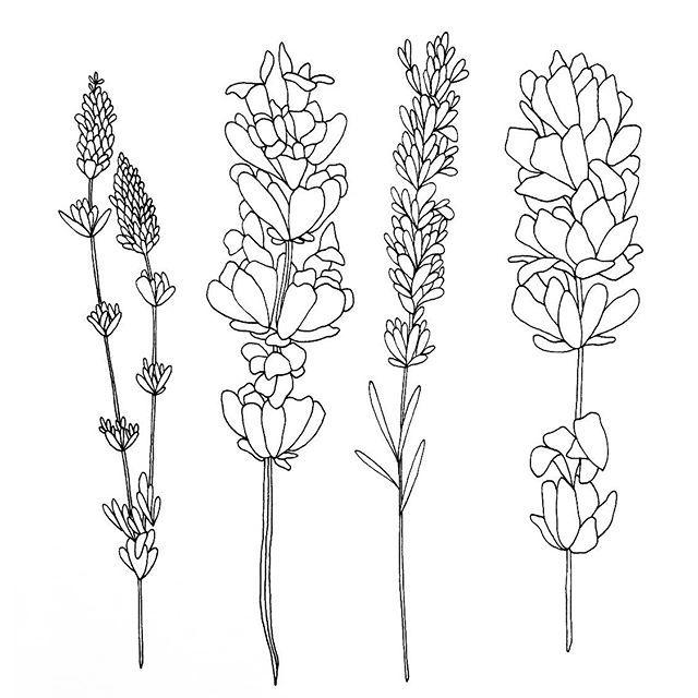Drawn lavender black and white #12