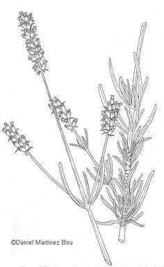 Drawn lavender black and white #14